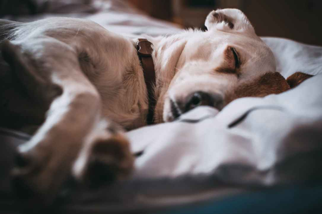 close up photography of sleeping dog