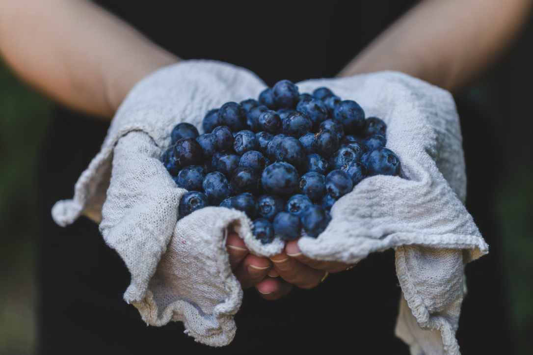 person holding blueberries